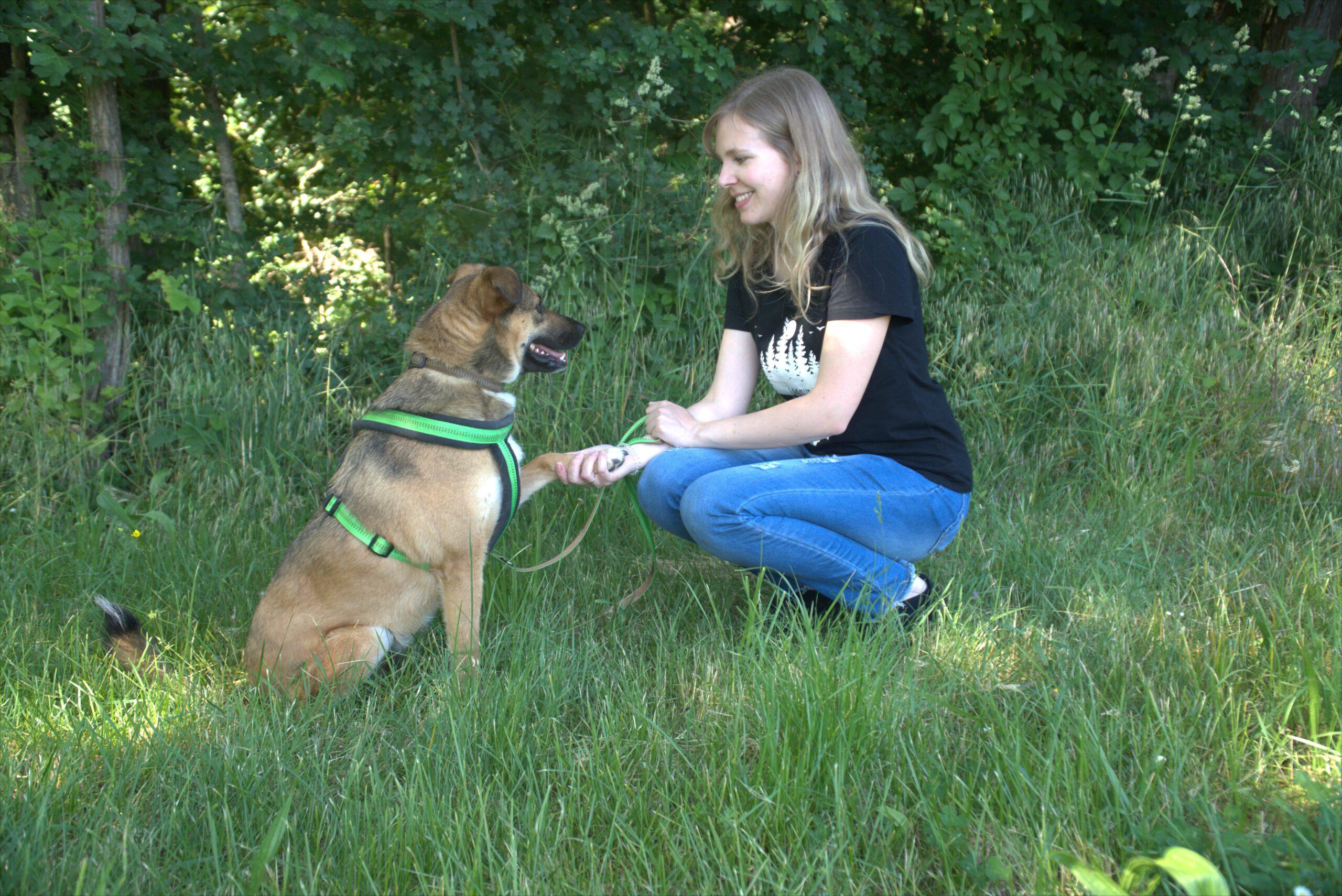 Hundetraining Kalli Pfote geben